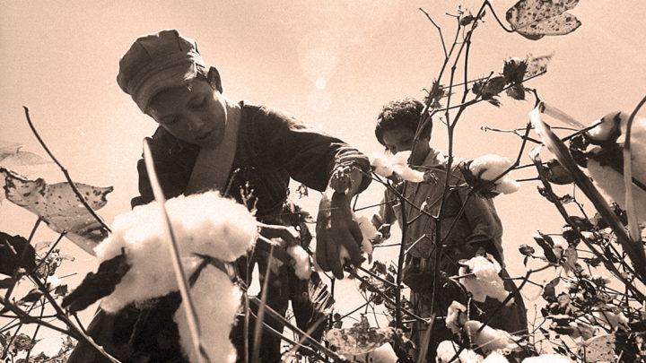 Migrant Children picking cotton