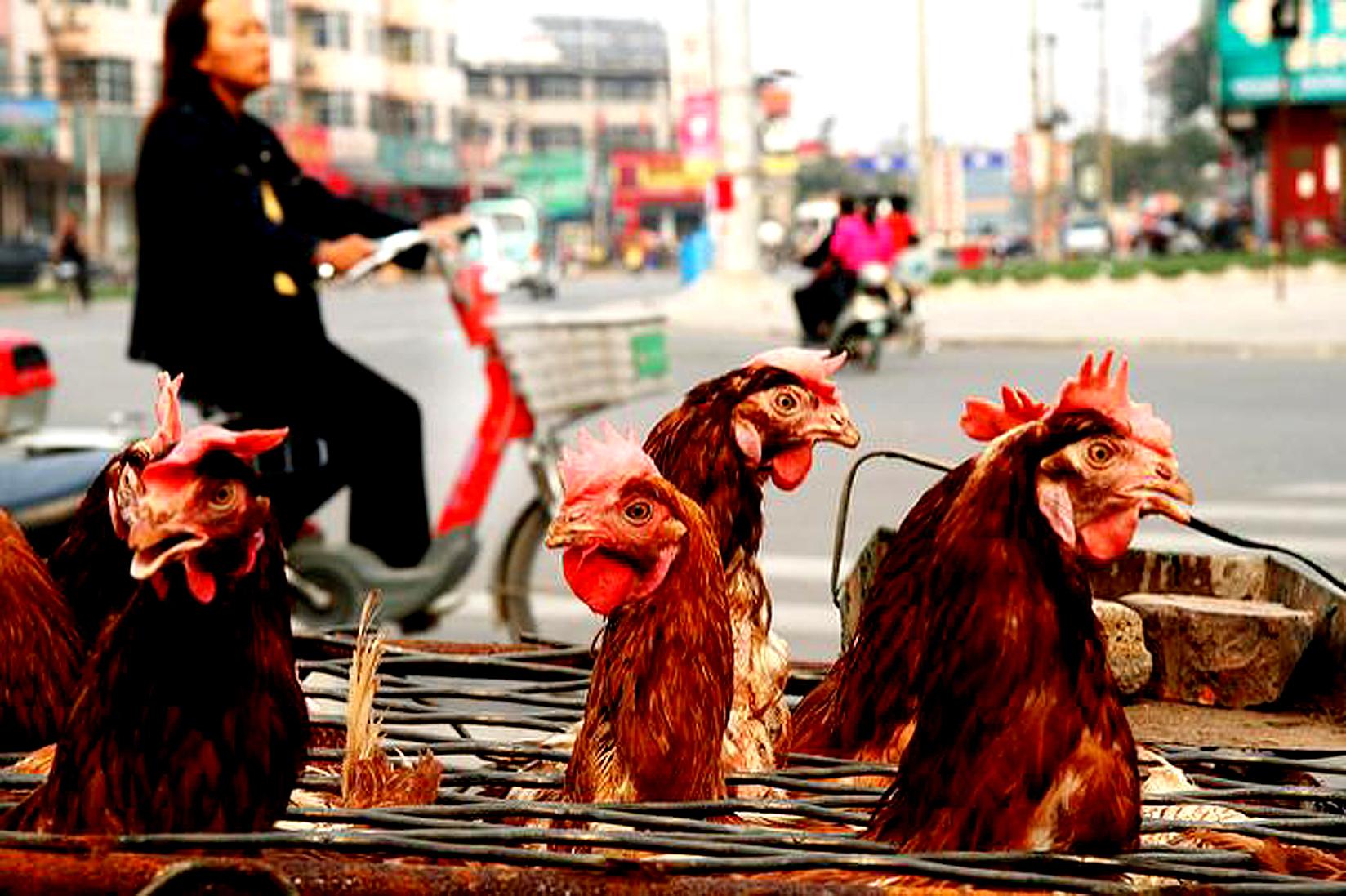 December 28, 1997 – The  Bird Flu Pandemic In Hong Kong – Egypt Upholds Ban On Female Genital Mutilation  – Kenya Braces For Elections.